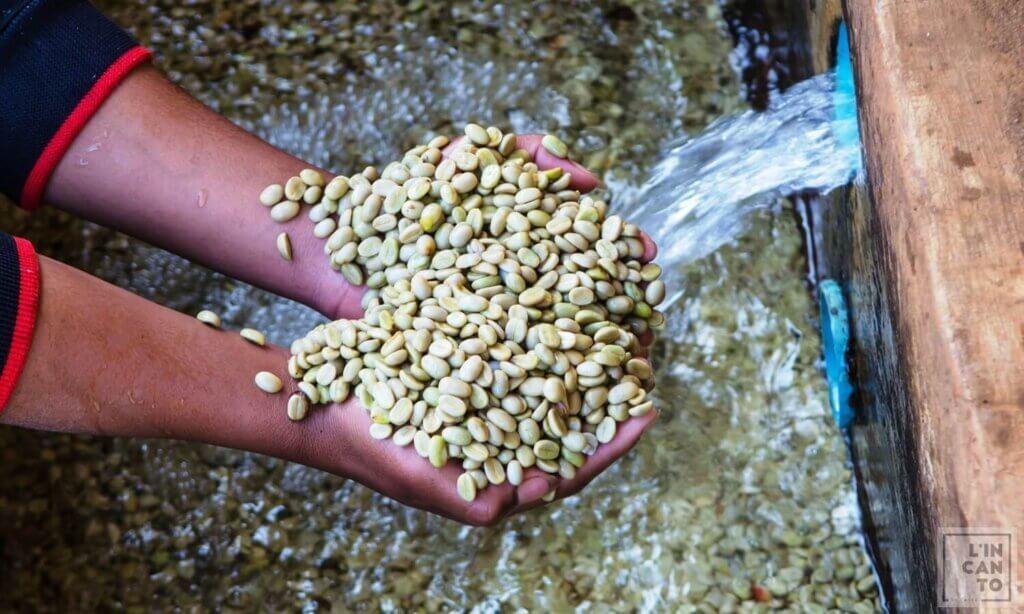 кафе-на-зърна-кения