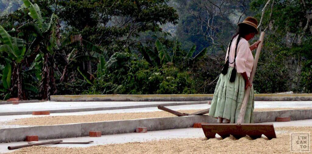 кафе на зърна уганда