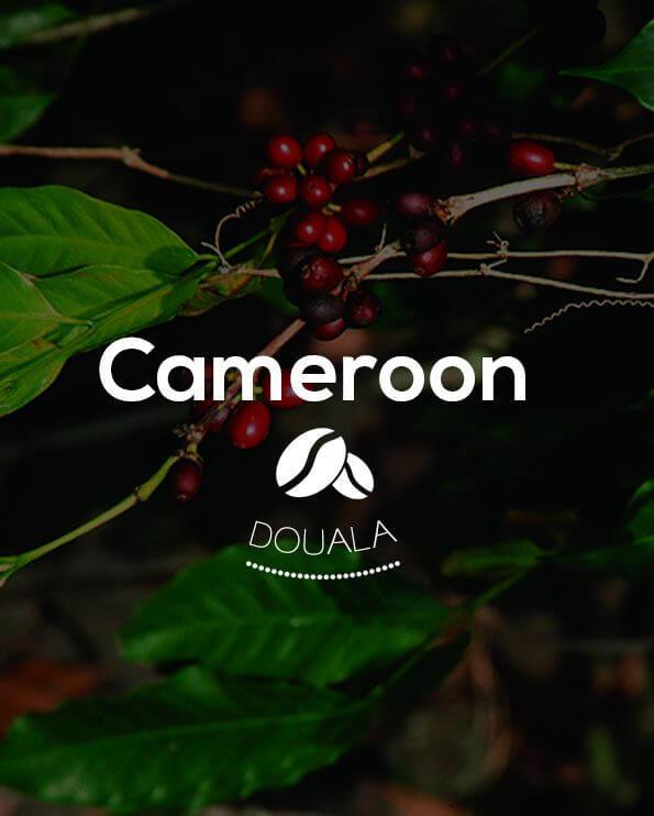 Кафе на зърна Камерун – Cameroon Douala Robusta