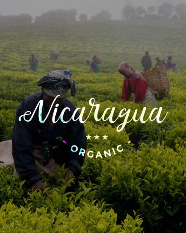 Кафе на зърна Никарагуа – Nicaragua Nueva Segovia