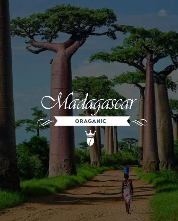 Кафе на зърна Мадагаскар – Madagascar Organic robusta