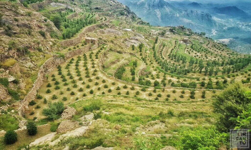 кафе на зърна Йемен