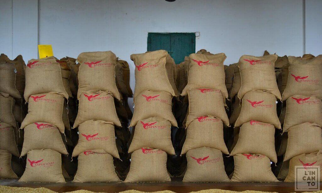 кафе-на-зърна-индия-арабика