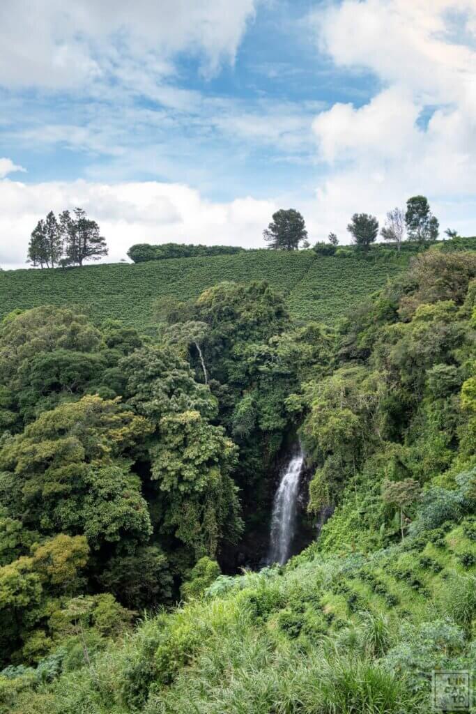 Кафе на зърна Коста Рика-Costa Rica White Honey